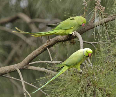 wildparrot2.png