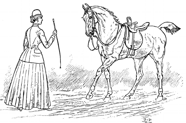 dessin-cheval-d-amazone.png