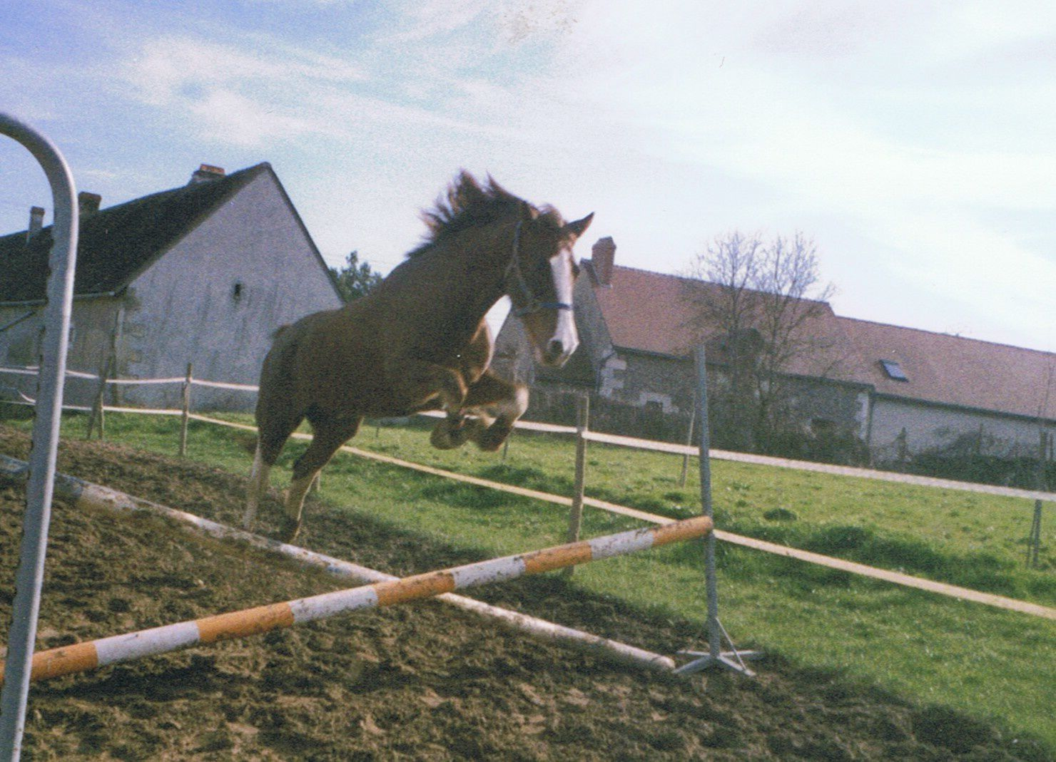 Sauts d 39 obstacles en libert faire sauter son cheval en - Frison saut d obstacle ...