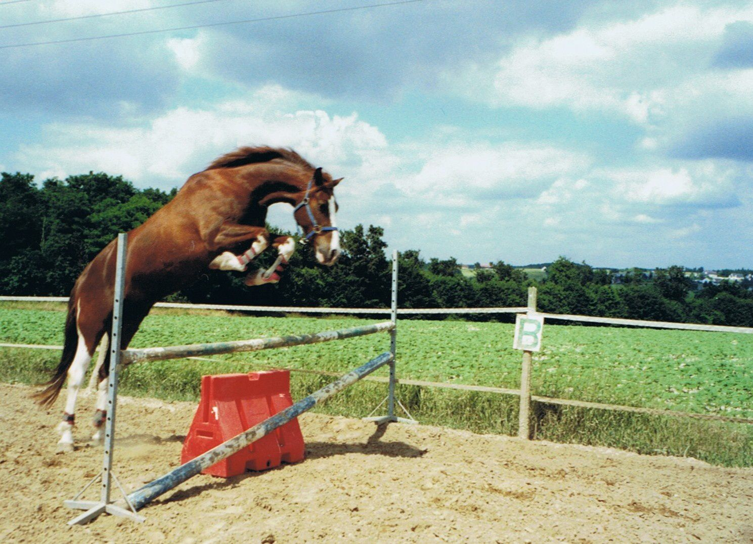 image cheval obstacle