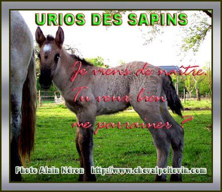 association cheval poitevin trait mulassier