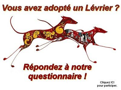 enquete-adoption-bulletin-levriers.jpg