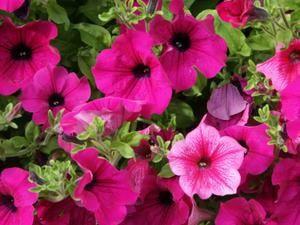 fleurs-perier-3-.jpg