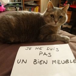 chat-meuble-jenesuispasunbienmeuble.tumblr.com.jpg