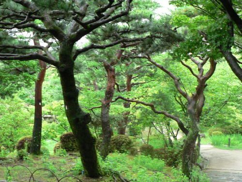 japon1-244.jpg