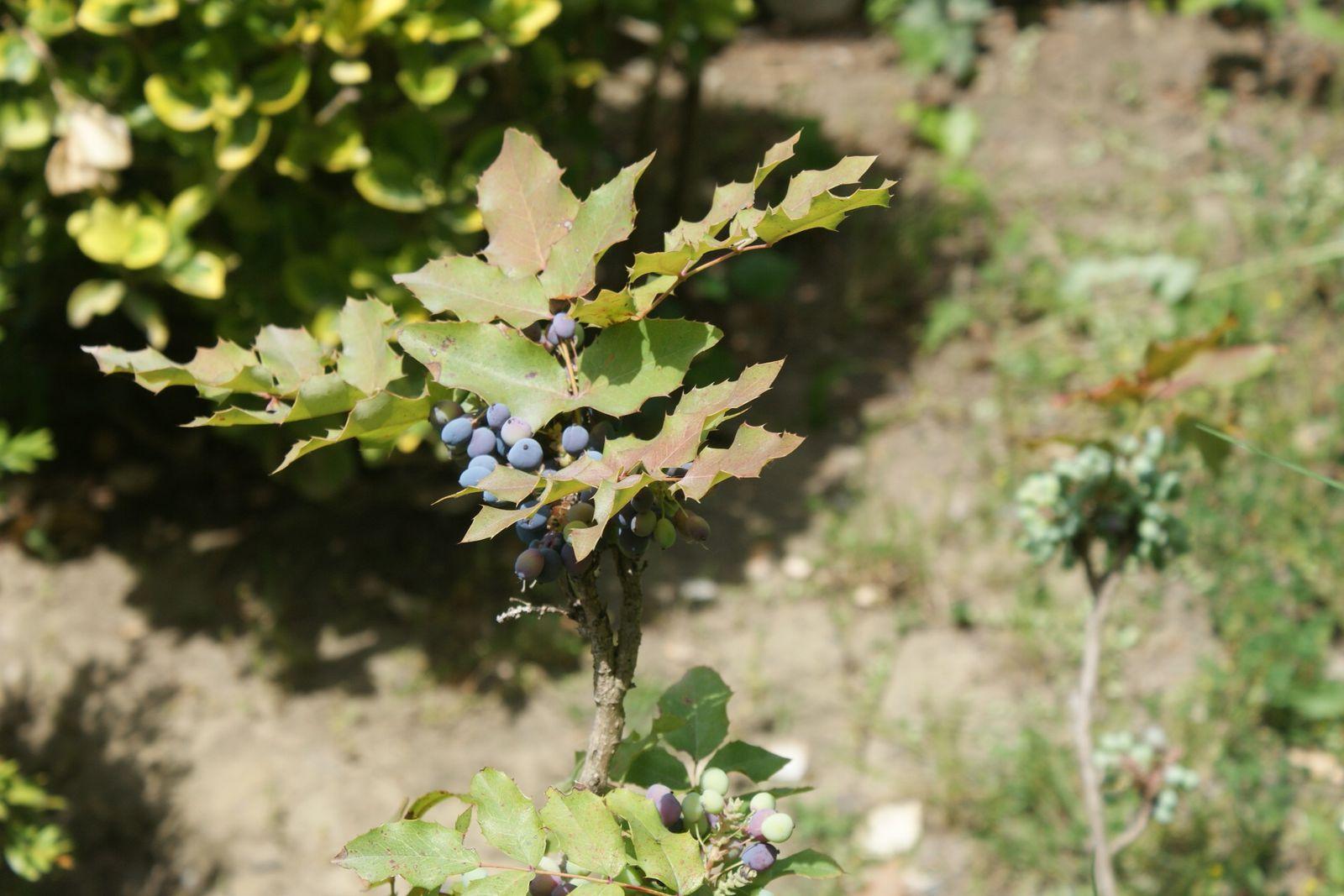 Petits coins fleuris au jardin japonais des mots et des for Arbuste jardin japonais