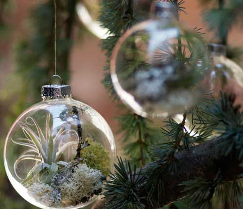 christmas-tree-ornaments-with-living-plants-3.jpg