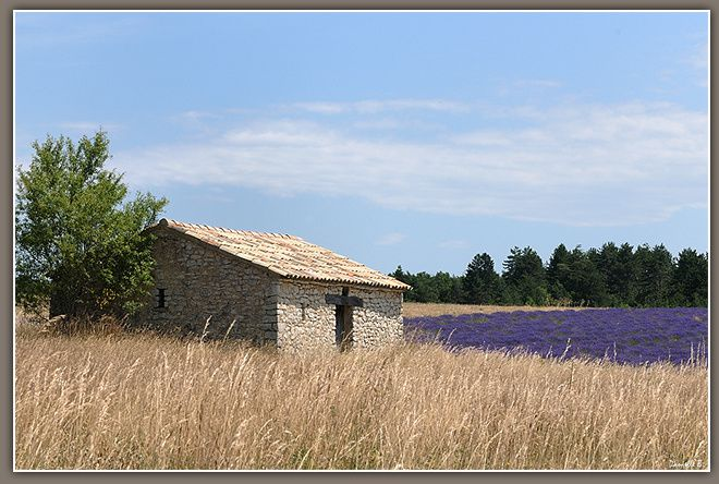Provence 3646-640