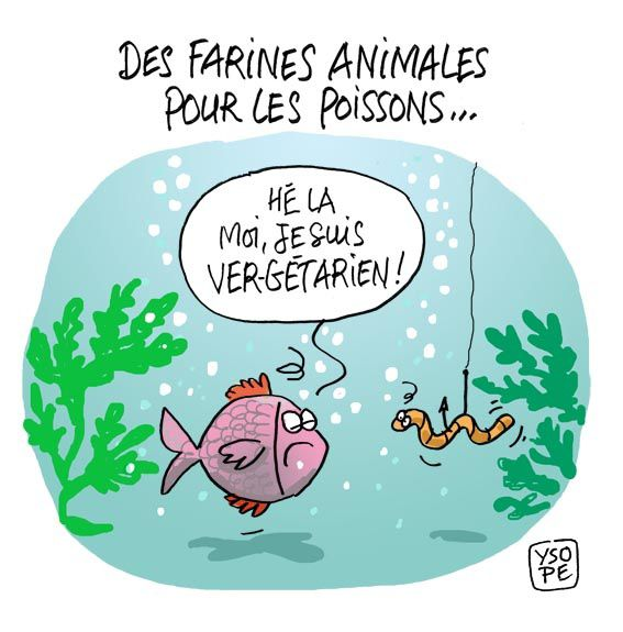 Farine-animale-poissonpetit.jpg