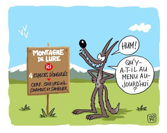 Montagne-de-Lure_Ysope.jpg