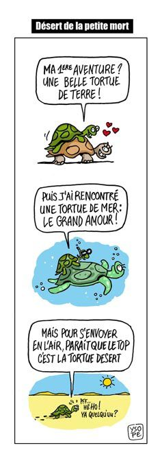Tortue strip 2