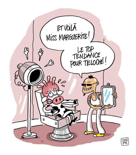 Super image coiffeur humour cj82 montrealeast - Vache dessin humour ...