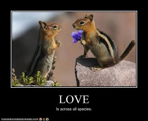 funny-pictures-chipmunks-have-love.jpg