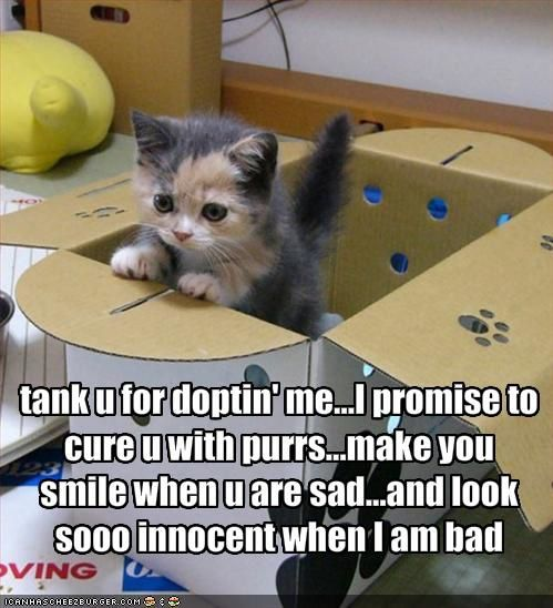 funny-pictures-kitten-is-thankful-that-he-is-adopted.jpg