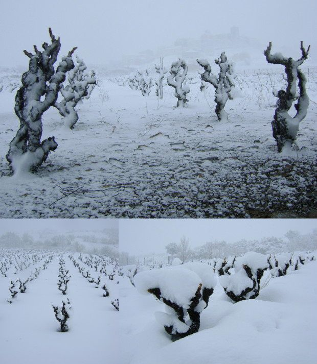 vigne sous la neige 8 mars 2010