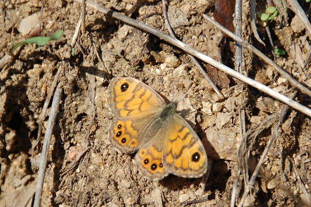 papillon-a-tempete-oct12.JPG
