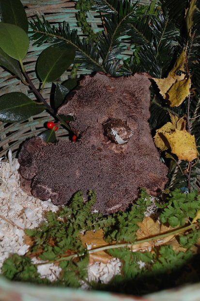 les-champignons-dans-mon-panier-8c.JPG