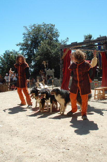 dog-trainer-2011-kg.JPG