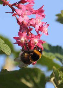 abeille-recadr--e-1-1.jpg