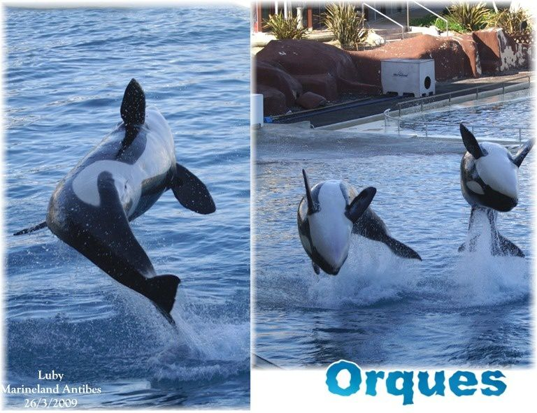 Avis rencontre otaries marineland