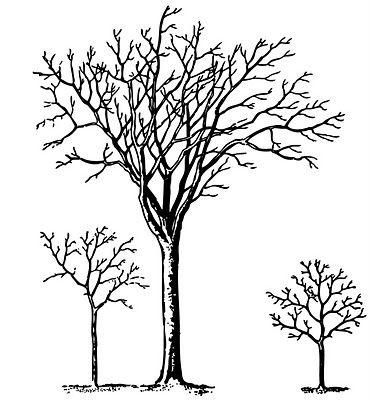req-trees2-graphicsfairy004c