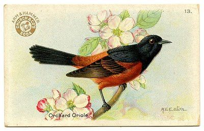 birdoriole-graphicsfairy009.jpg