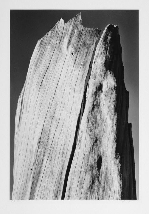 Ansel-Adams-White-Stump-Sierra-Nevada-36.jpg
