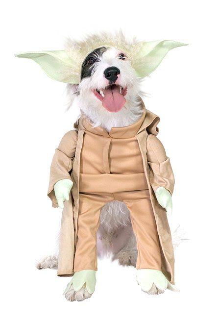 costume_chien_2.jpg