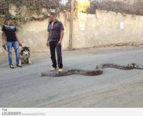 taking-the-snake-for-a-walk.jpeg