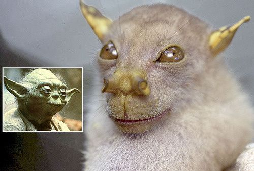 a-bat-bearing-a-curious-resemblance-to-star-wars.jpeg