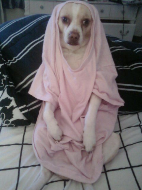 my-dog-yoshi-is-muslim.jpeg