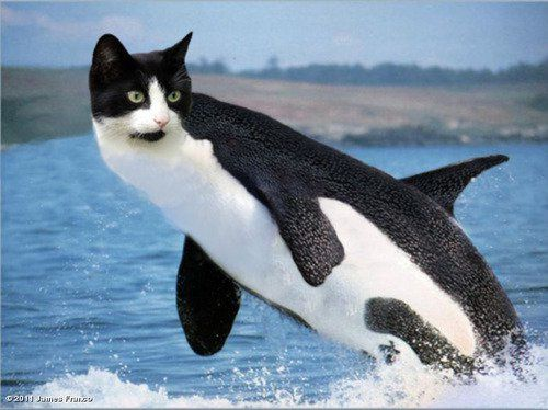 kitty-whale.jpeg