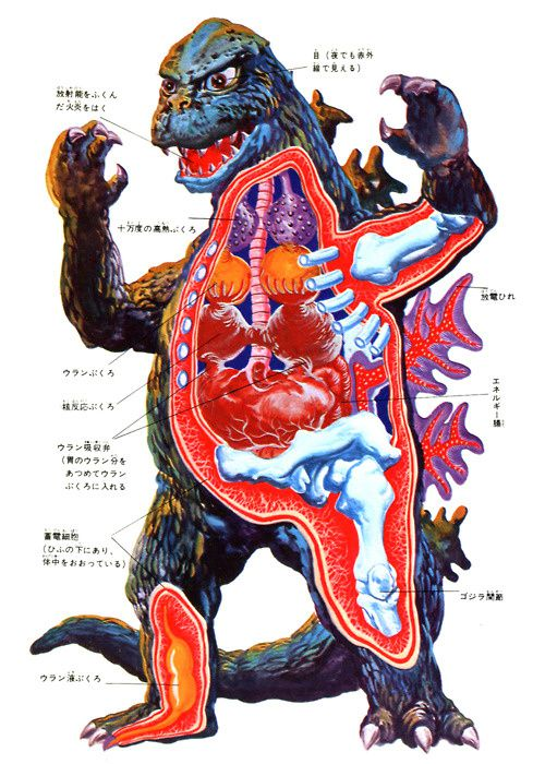 hedorah-and-godzilla-anatomical.jpeg