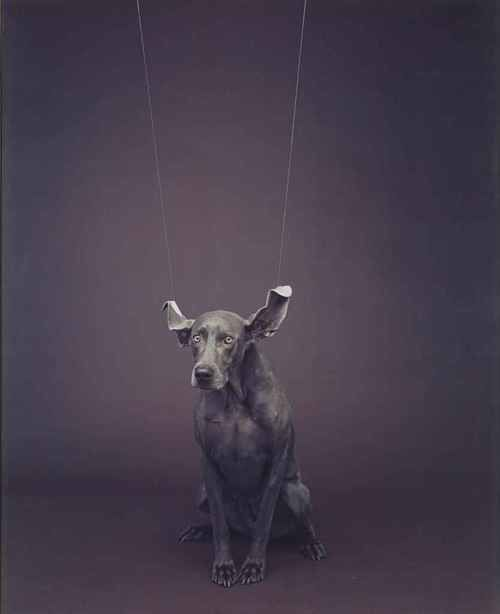 william-wegman.jpeg