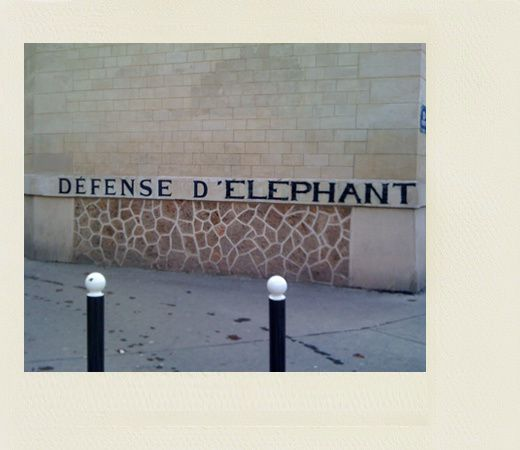 defense-d-elephant.jpg