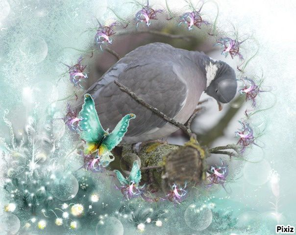 image-encadree-pixiz-marie-pigeon-poulain
