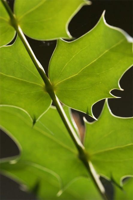 Macromania florale