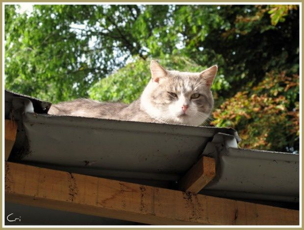 CHATS-CHIENS 0302 0131