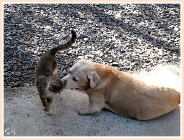 CHATS-CHIENS 4174-1