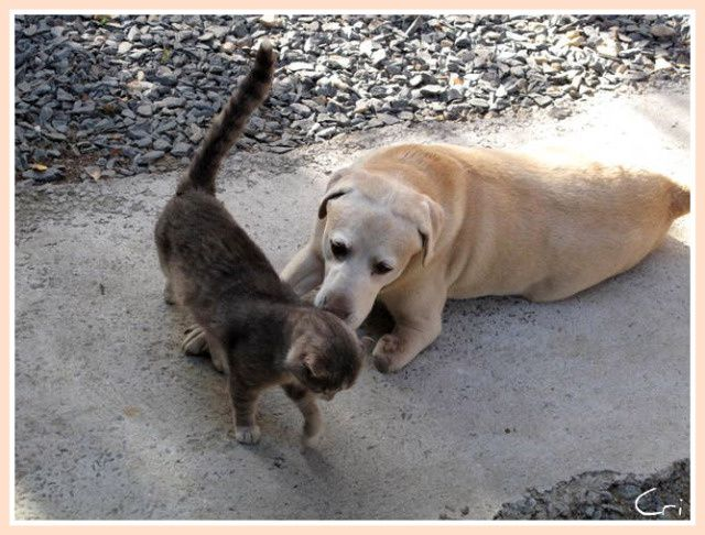 CHATS-CHIENS 4175-1