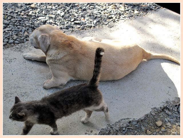 CHATS-CHIENS 4176