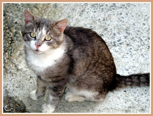 CHATS-CHIENS 4178-1