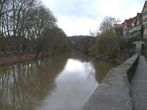 Bord-du-Neckar--20-.JPG