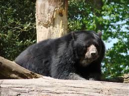 ours-noir.jpg