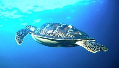 -Turtle.jpg