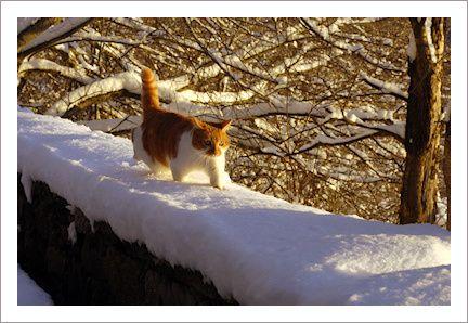 Saucisse à la neige 1