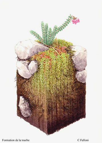 pav--tourbe-copie-1.jpg