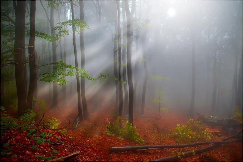 Promenons nous dans les bois !...