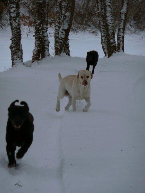 les 3 neiges 2012 (2)