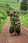 Banana_carrier_Uganda.jpg